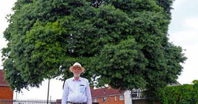 Help Increase Bristol's tree canopy