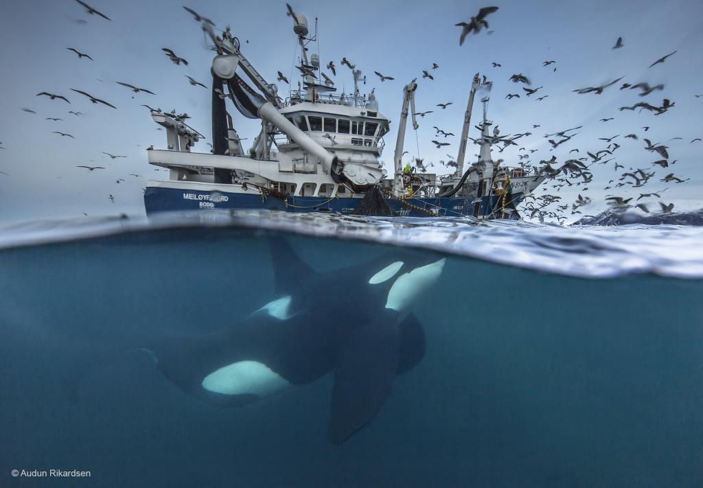 audun-rikardsen_wildlife-photographer-of-the-year-copy